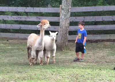 Anthony in Field with Alpacas